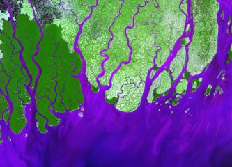 False color image of the Ganges River Delta