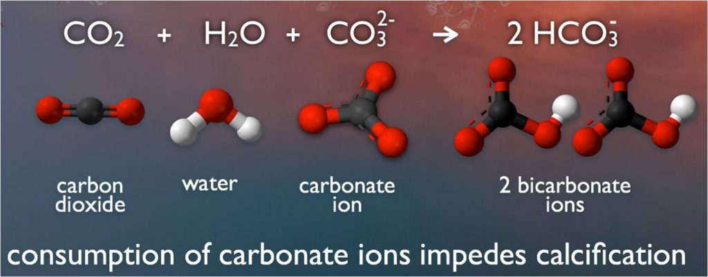 Seawater carbonate chemistry (Source: NOAA)