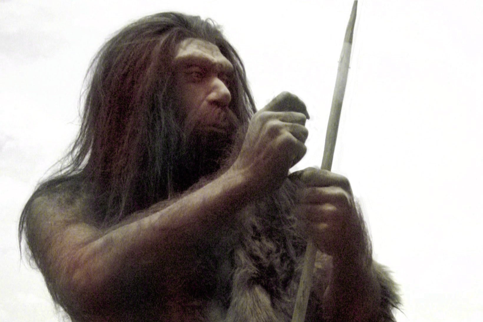 homo neanderthals A study guide to our distant cousins, the neanderthals, including an overview, important facts, archaeological sites, suggestions for further reading.