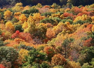 Autumn leaves in Connecticut. (Credit: Ragesoss, Wikimedia Commons)