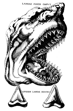 sketch of the shark's head and teeth
