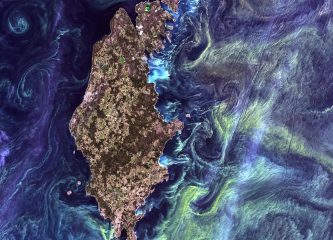 Here's a Landsat image of phytoplankton blooms in the Baltic Sea, which reminded NASA scientists of a Van Gogh's Starry Night painting. (Credit: NASA's Goddard Space Flight Center/USGS)