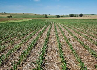 This Iowa farm uses eco-friendly no-till practices to grow corn and soybeans. (Credit: Jason Johnson, USDA NRCS Iowa)