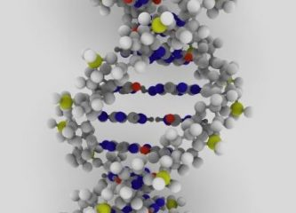 A model of the double helix structure of  DNA. (Wikimedia Commons)