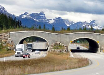 Wildlife overpasses in Banff National Park in Canada help animals cross highways safely. (Credit: WikiPedant via Wikimedia Commons)