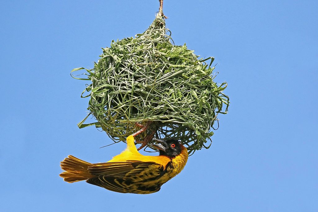Bird building nest