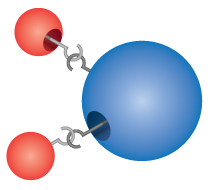 Dalton incorrectly imagined that atoms 'hooked' together to form molecules