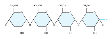 The Starch Molecule