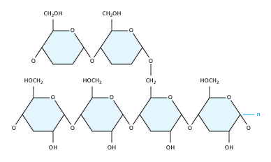 The Glycogen Molecule
