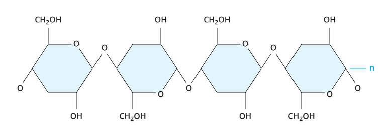 places where chemosynthesis occurs Factors affecting rate of photosynthesis it takes place in the mitochondria during cellular chemosynthesis photosynthesis it occurs only in colourless.