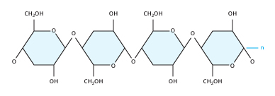 The Cellulose Molecule