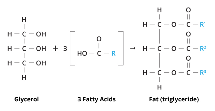 A Fat Molecule 57