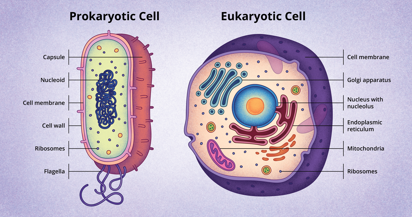 compare the modern cell theory to the original cell theory