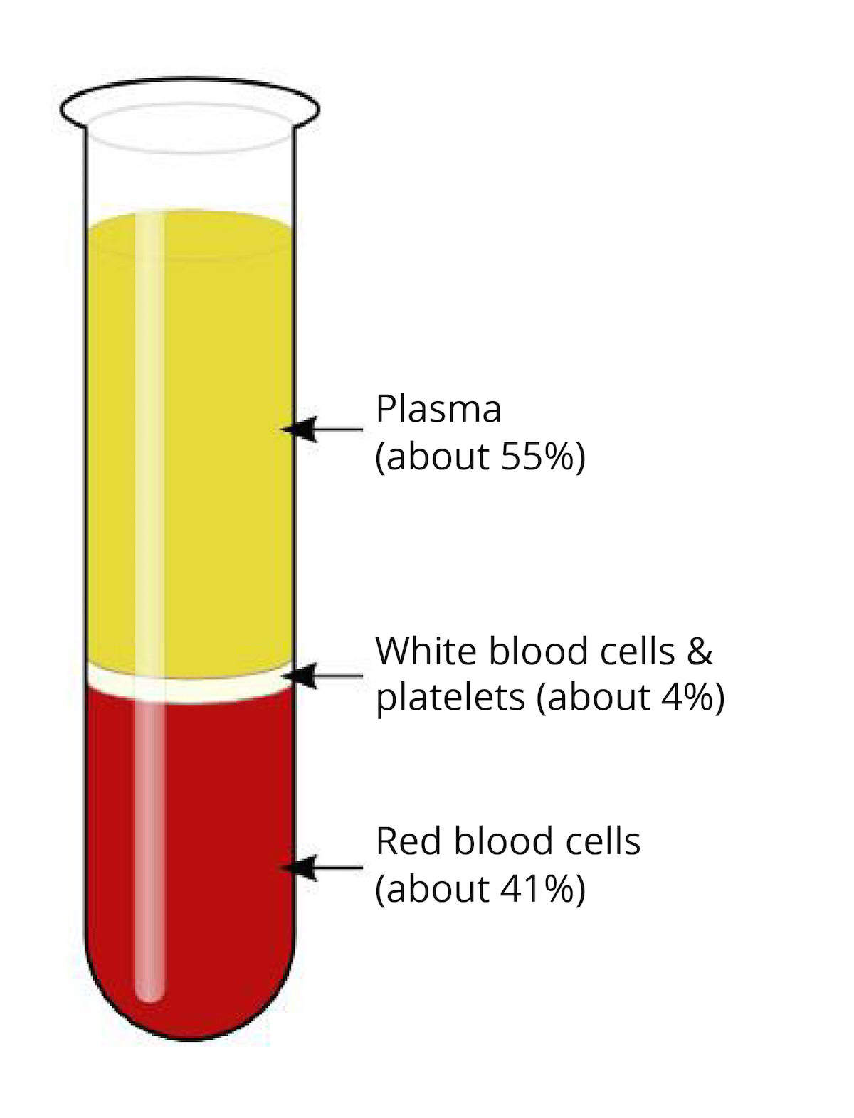 composition of blood The composition of blood i ii iii iv blood is composed of the following plasma red blood.
