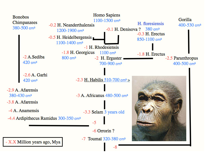 Introduction to Paleoanthropology  Biology  Visionlearning