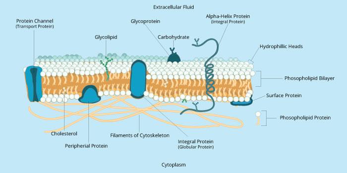 Membranes I