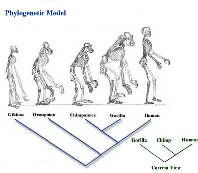 similarities between humans and primates essay The extraordinary kinship and differences between humans and nonhuman primates if you were to look at an ape right now, you would find an ongoing list of both similarities and differences they have with humans.