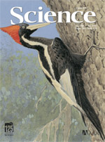 woodpecker - from Science cover