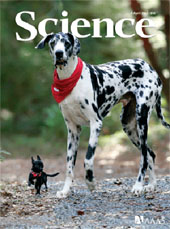 cover - Science magazine/dogs
