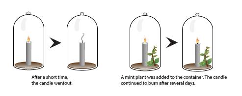 Jan Ingenhousz Photosynthesis Experiment >> Photosynthesis I | Biology | Visionlearning