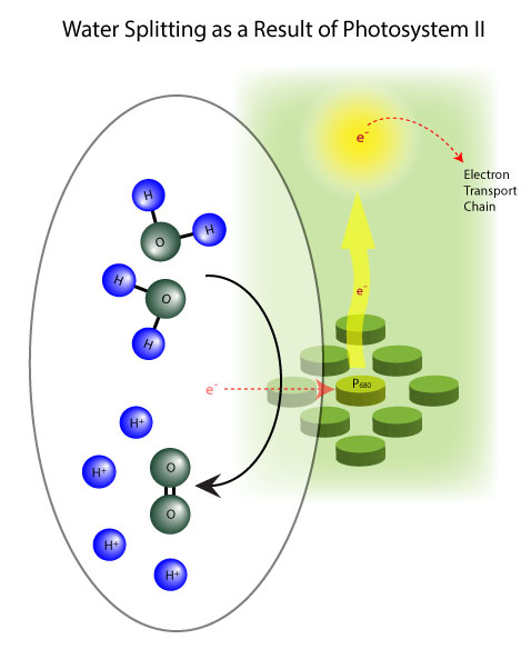 water splitting