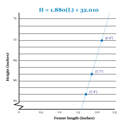 femur length by height