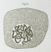 Fleming cell drawing