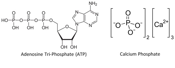 ATP and calcium phosphate_revised