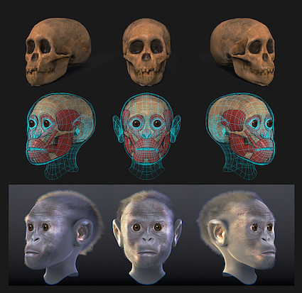 Taung child reconstruction