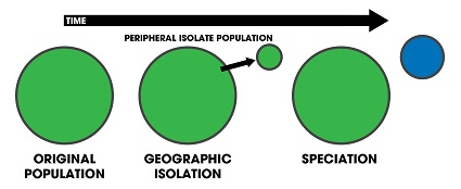 Speciation of an isolated population