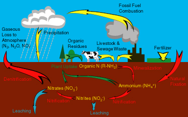 the nitrogen cycle earth science visionlearning